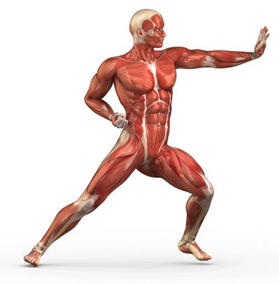 عملکرد ژل رویال در ورزشکاران